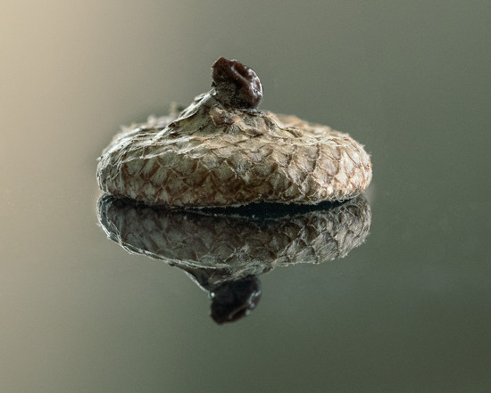 Acorn Cap by rosiekerr