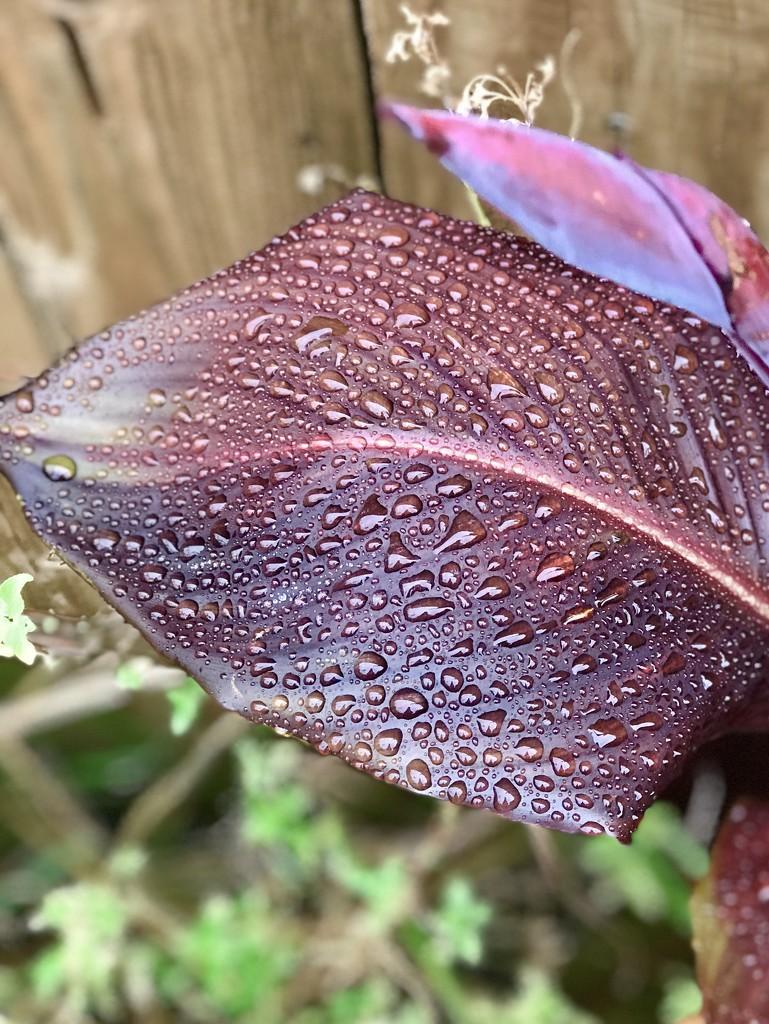 It rained yesterday! by louannwarren