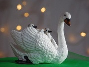 5th Oct 2017 -  Swan and bokeh