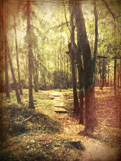 Walk with me through the woods by pamknowler