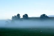 6th Oct 2017 - Morning near Moeraki