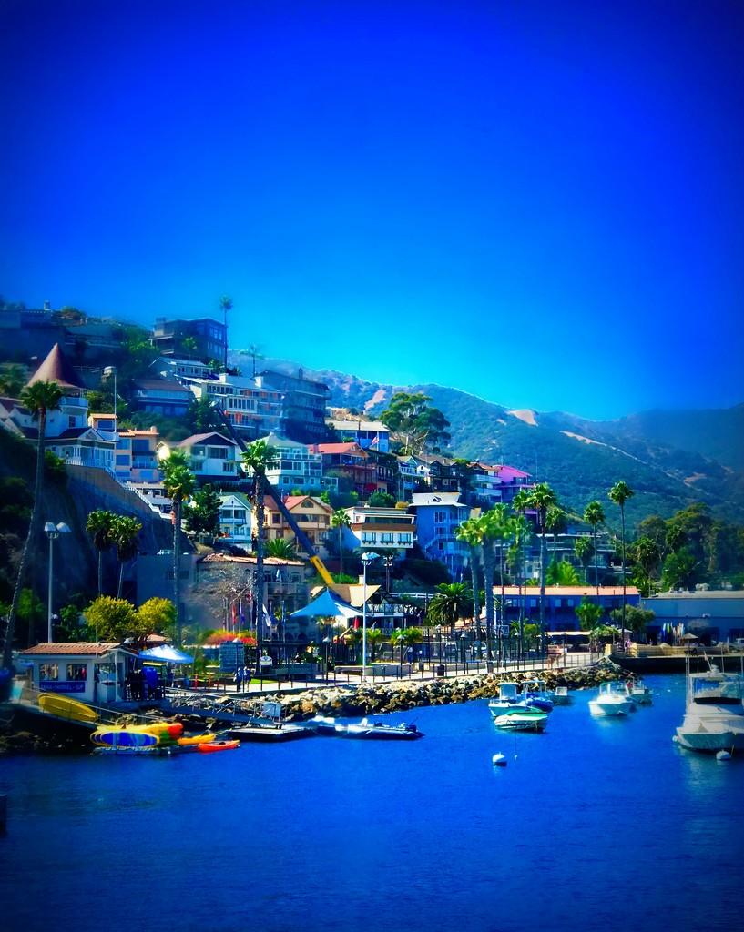 Santa Catalina  by gardenfolk