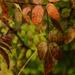 October Words - Leaves