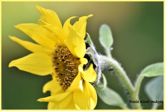 Sunshine on a sunny day by rosiekind