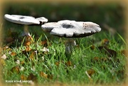 6th Oct 2017 - More fungi