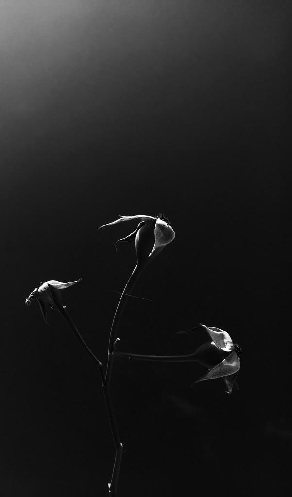 In the dark new beginnings linger by stimuloog