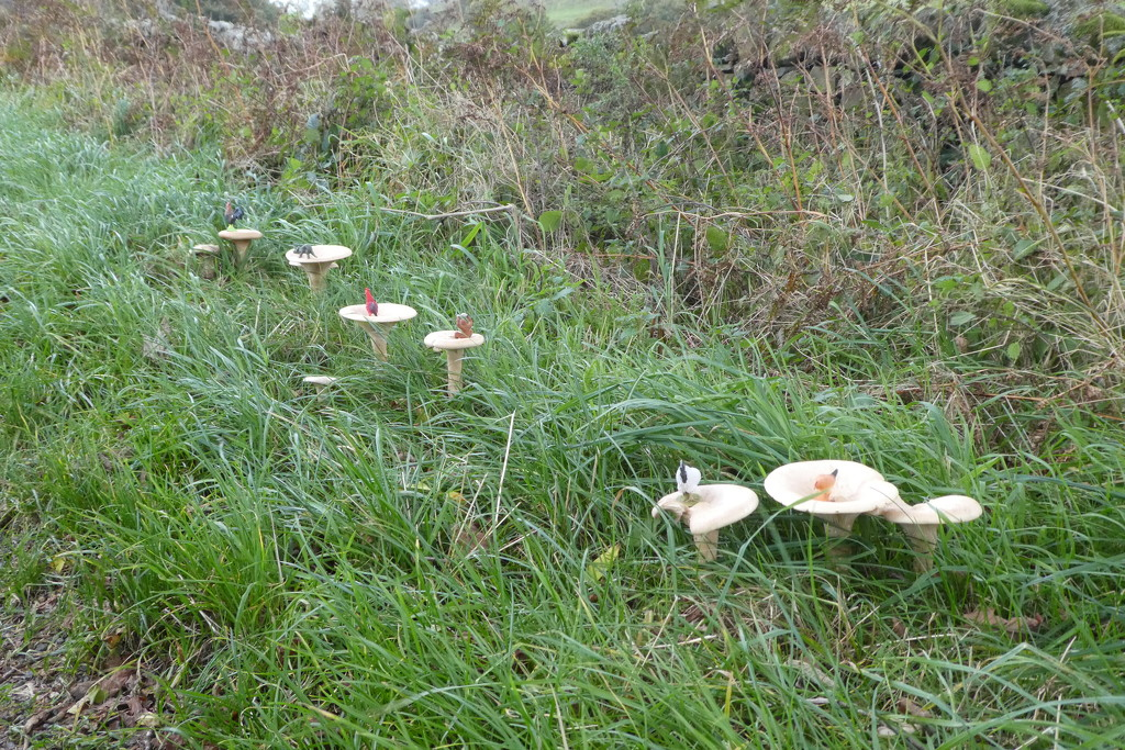 oooh, there's some empty looking mushrooms, I thought!  by anniesue