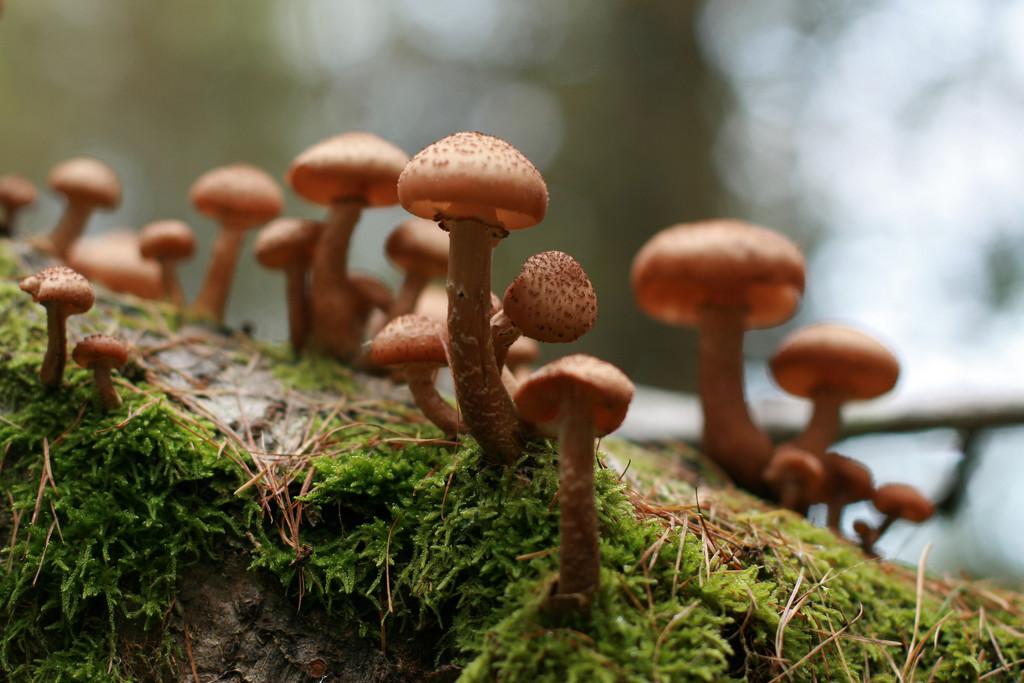 fallen tree fungi by callymazoo