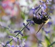 5th Oct 2017 - Bee Dainty!