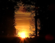 6th Oct 2017 - Sunset Through the Trees
