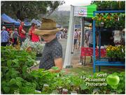 7th Oct 2017 - At Nanango country market