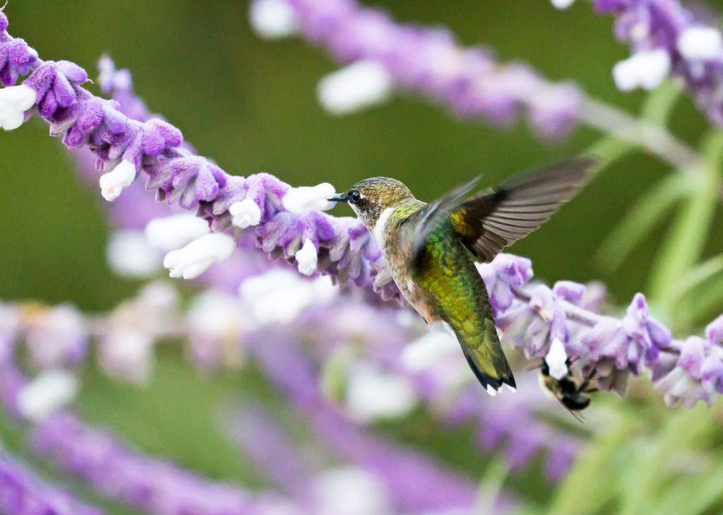 We have a hummingbird!! by shesnapped