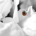 Ladybird SC by rjb71