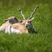 Soft Touch At Wildlife Safari