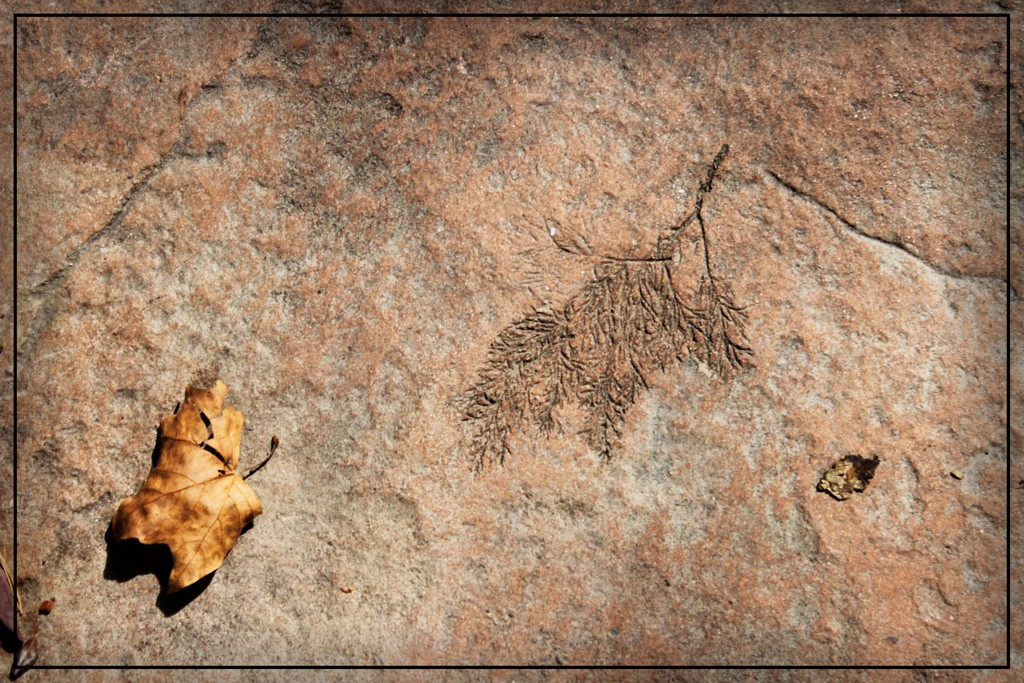 A Leaf and Etching on the Pathway by olivetreeann