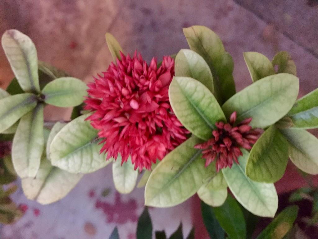 Pretty flowers bloom as the rains recede by veengupta