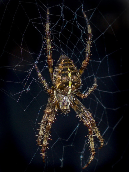 Spider & Web by tonygig