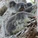 koala favs by koalagardens
