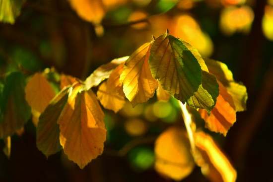 Autumn Leaves by jayberg