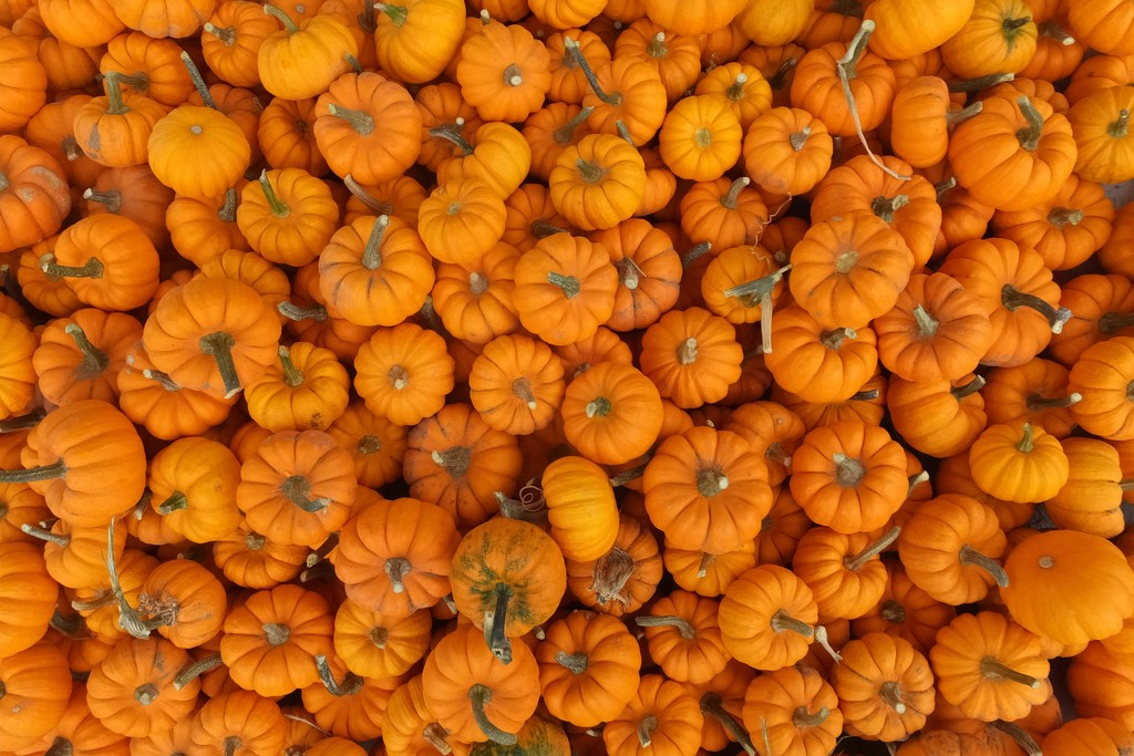 Many Pumpkins by linnypinny