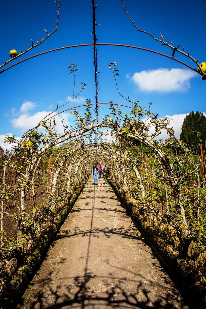 Apple Arch by swillinbillyflynn
