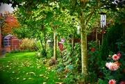 9th Oct 2017 - My Atumnal Garden