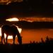 Kansas Sunrise 10-9-17 by kareenking
