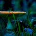 Moonlit Mushroom... by vignouse