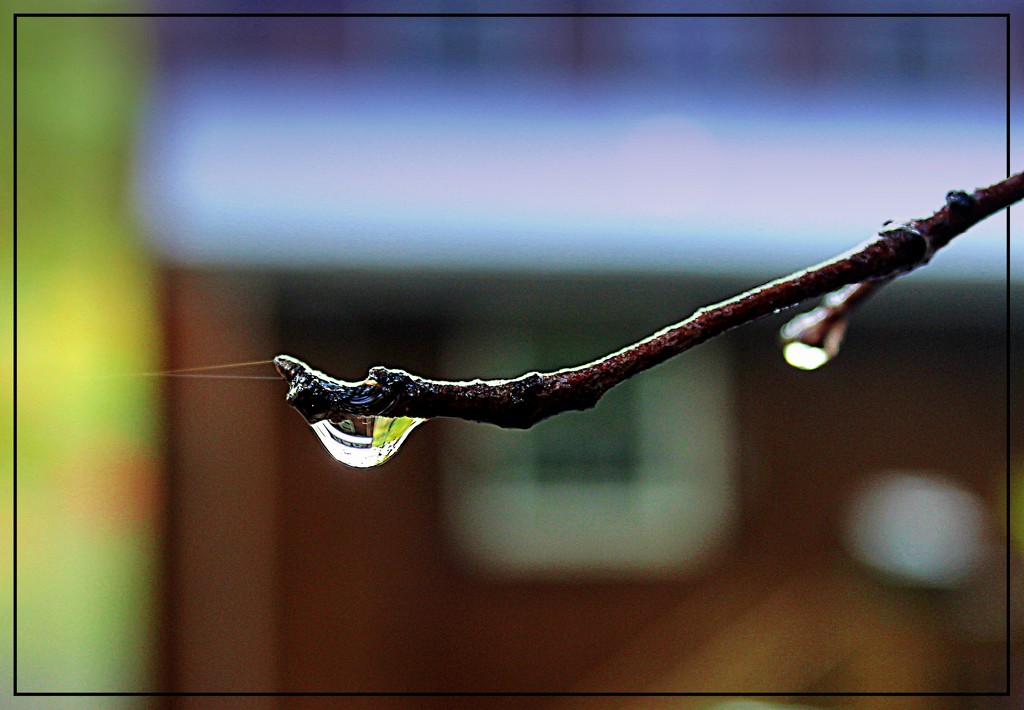 A Few Raindrops Today by olivetreeann