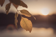 9th Oct 2017 - golden hour
