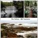 Tarkine Wilderness Area - N.W.Tasmania
