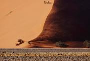 27th Sep 2017 - Sand dunes