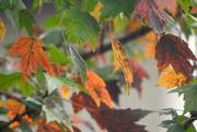 10th Oct 2017 - Fall Rain