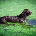 Slime dog