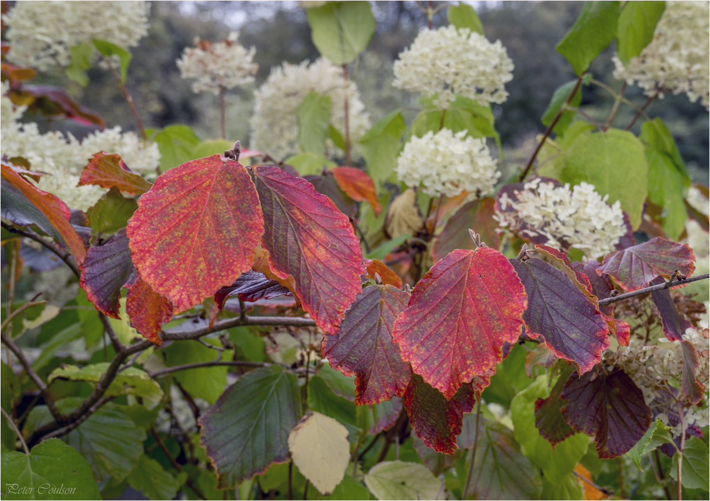 Autumnal Reds by pcoulson