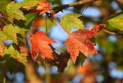 11th Oct 2017 - Autumn Bokeh