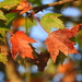 Autumn Bokeh by homeschoolmom