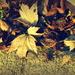 ETSOOI Fallen Leaves