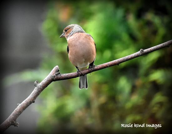 Eyeing up the feeder by rosiekind