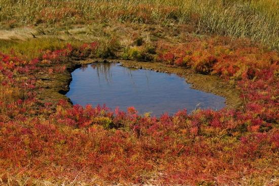 Marsh Pond. by meotzi