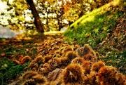 12th Oct 2017 - 2017-10-12 chestnut grove at harvest
