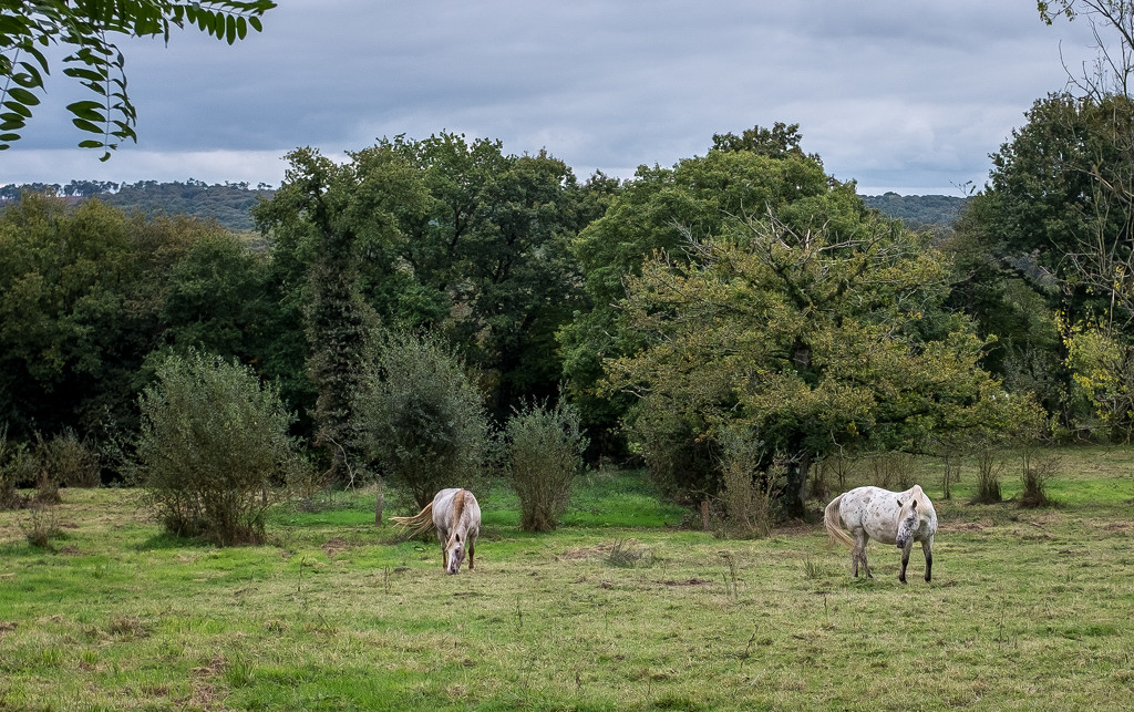 Grazing... by vignouse