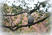13th Oct 2017 - Waiting in the tree