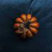 Pumpkin 7 by loweygrace