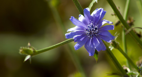 Wild Flower by lisahans