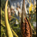 Fall pod w seeds 2017