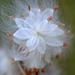 Bursting at the seams! by fayefaye