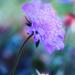 Blossom by joysfocus