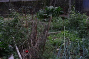 11th Oct 2017 - Remains of the Garden