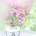 lilacs by kali66